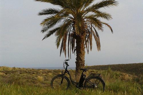 Alquiler de bicicletas Ecobike Elegance en Murcia